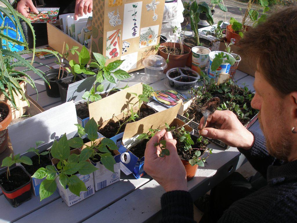 Zahlreiche Jungpflanzen wurden mitgebracht, die Pflege besprochen und vor Ort gleich gepflanzt.