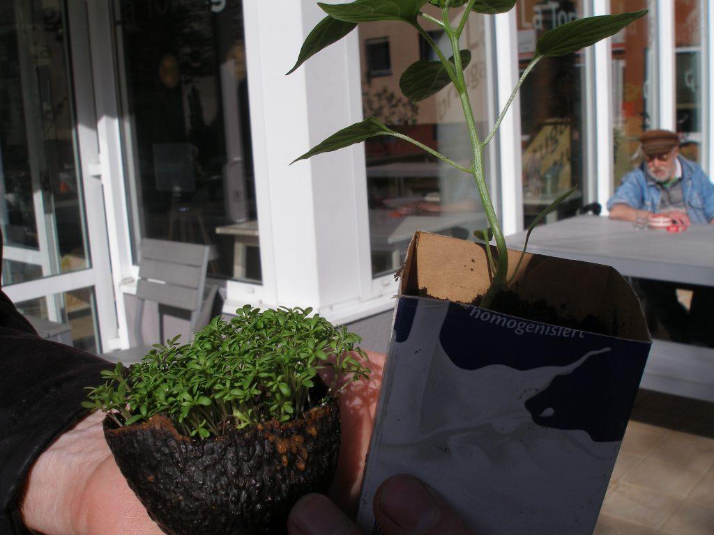 Und es gab zahlreiche Varianten, was man alles als Pflanzgefäß benutzen kann. Dieses Beet mit Gartenkresse in einer Avocadoschale hat besonders beeindruckt.